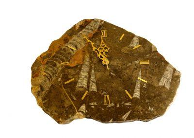 Fossilien-Uhr